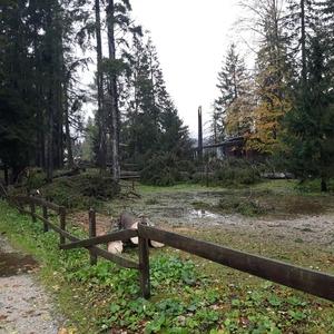 danni tonezza ottobre 2018 (foto Giovanni Dellai)